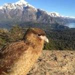 Fauna argentina